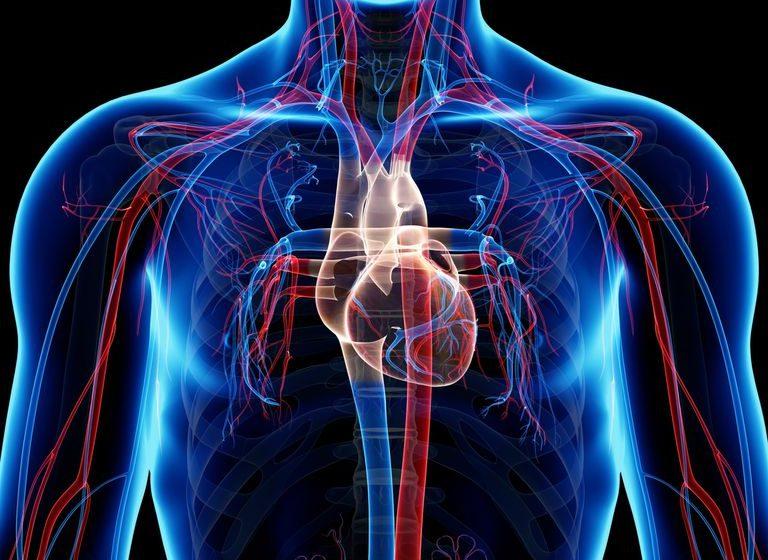 Así afecta la cocaína las arterias coronarias