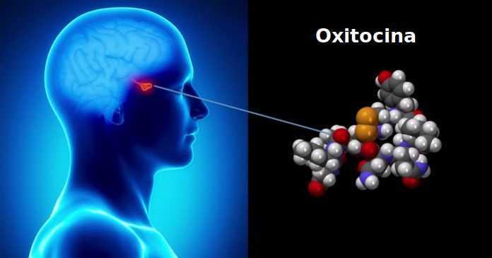 El lado oscuro de la oxitocina, la hormona del amor